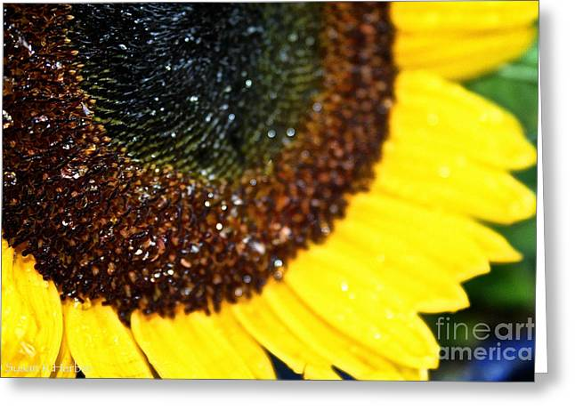 Sunflower Glitter Greeting Card by Susan Herber