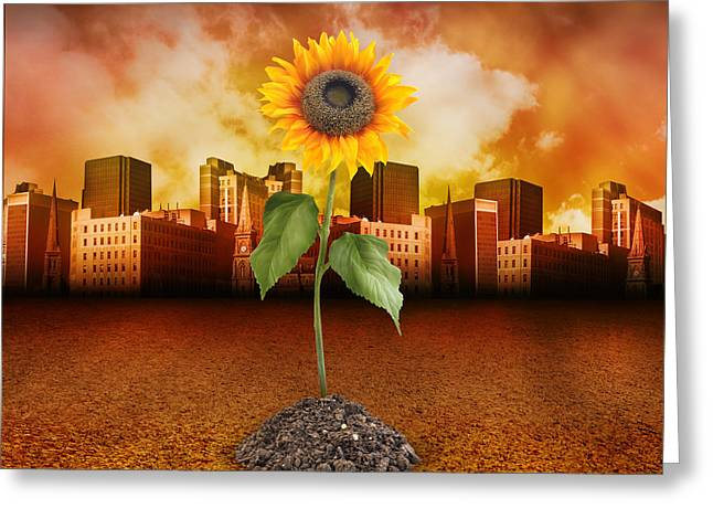 Sunflower In Red City Greeting Card by Angela Waye