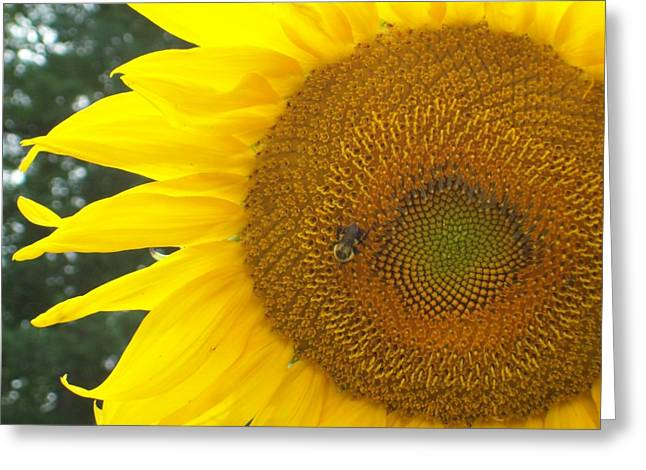 Greeting Card featuring the photograph Sunflower by Lou Ann Bagnall