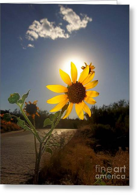 Greeting Card featuring the photograph Sunflower by Mistys DesertSerenity