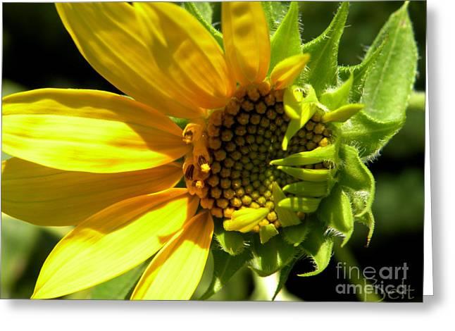 Sunflower No. 1 Greeting Card by Christine Belt