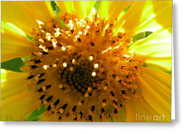 Sunflower No.16 Greeting Card by Christine Belt