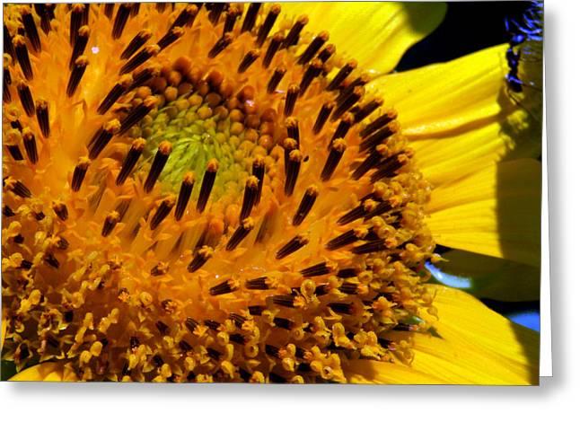 Sunflower No.23 Greeting Card by Christine Belt