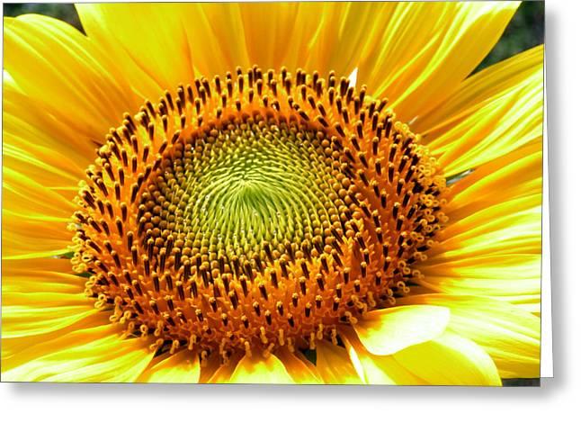 Sunflower No.26 Greeting Card by Christine Belt
