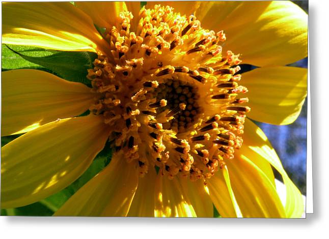 Sunflower No.36 Greeting Card by Christine Belt