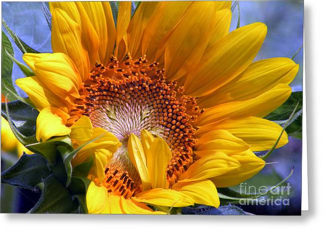 Sunflower No.37 Greeting Card by Christine Belt