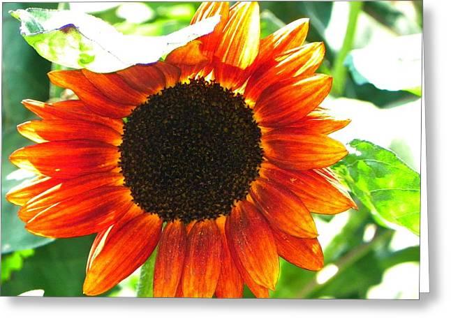 Sunflower Greeting Card by Rhiannon Hamm