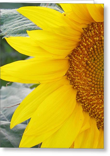 Sunflower Sun Greeting Card