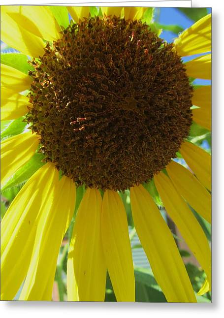 Sunflower-two Greeting Card by Todd Sherlock