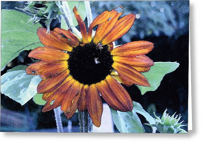 Sunflower With Bee Greeting Card by Eunice Olson
