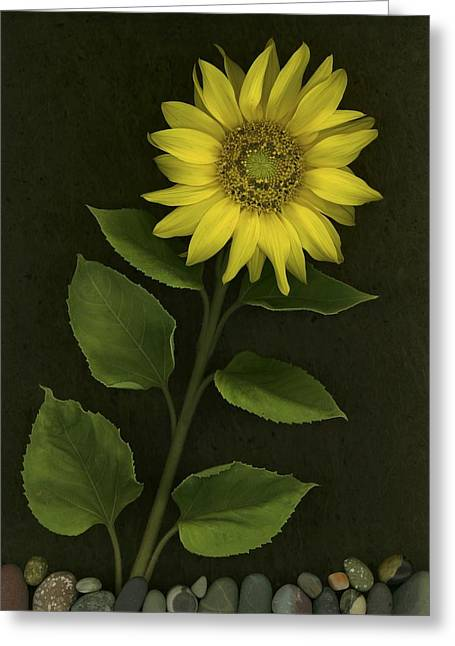 Sunflower With Rocks Greeting Card by Deddeda