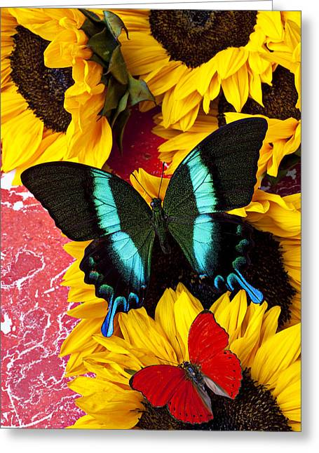 Sunflowers And Butterflies Greeting Card by Garry Gay