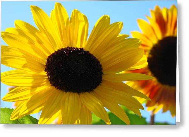 Sunflowers Bright Yellow Colorful Art Print Sunflower Greeting Card by Baslee Troutman