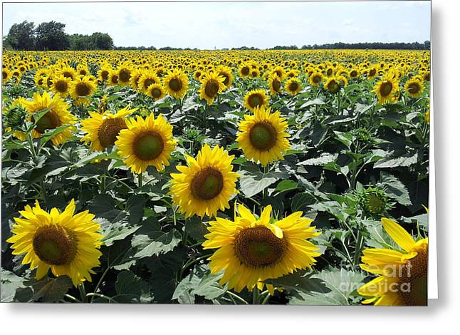 Greeting Card featuring the photograph Sunflowers by Cheryl McClure
