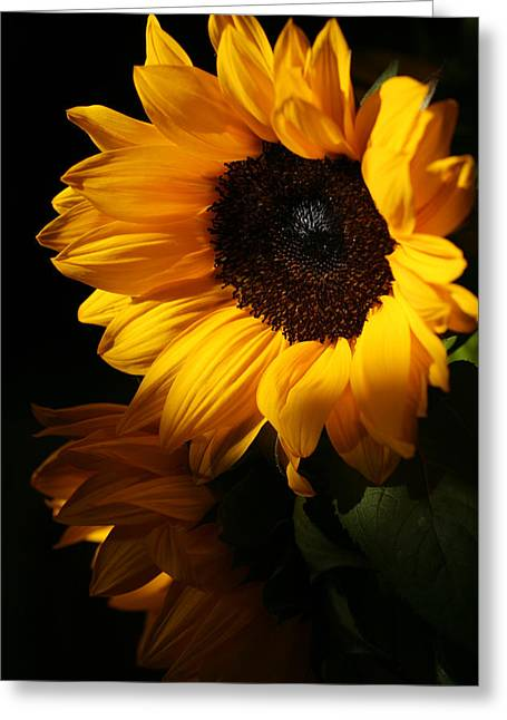 Sunflowers Greeting Card by Dorothy Cunningham