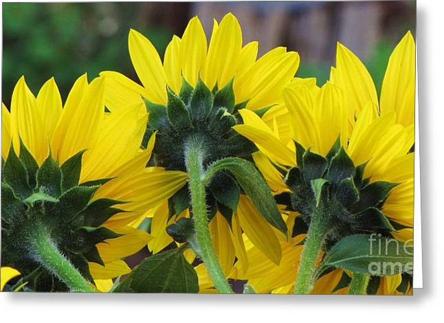 Greeting Card featuring the photograph Sunflowers  by Michele Penner