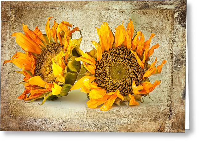 Sunflowers No 413 Greeting Card