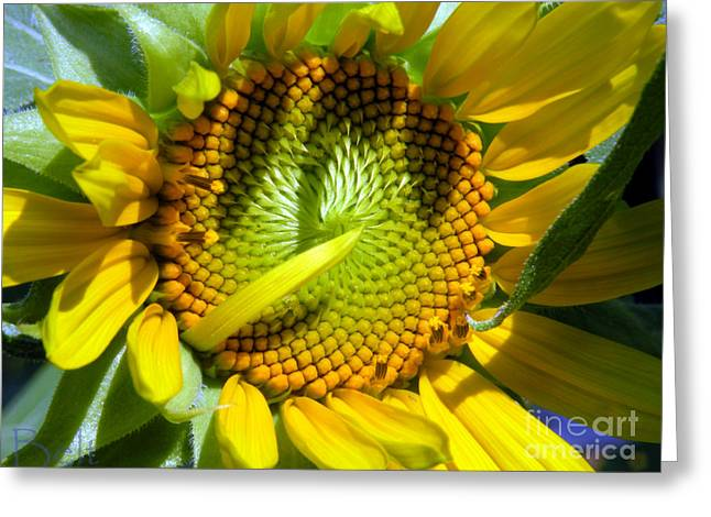 Sunflowers No.33 Greeting Card by Christine Belt