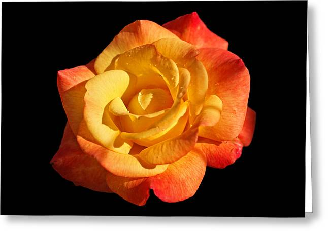 Sunlight And Shadows Greeting Card by Sandy Keeton