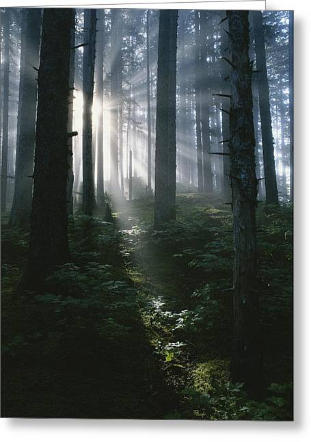 Sunlight Beams Through The Forest Greeting Card by Rich Reid