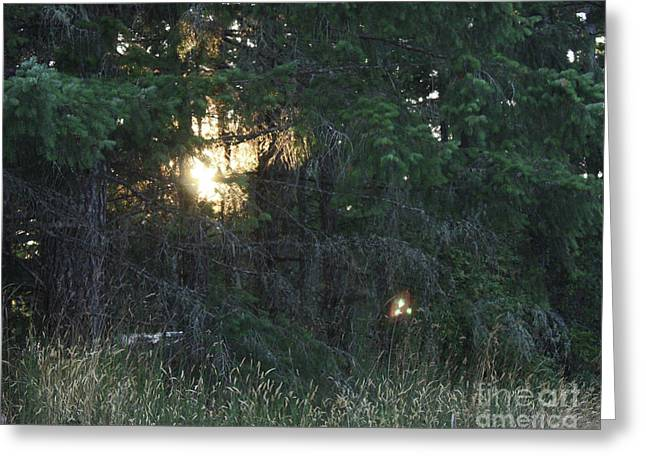 Sunlight Orbs 3 Greeting Card by Jane Whyte