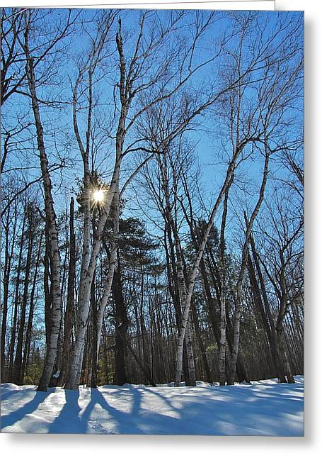 Sunlight Through Birches Greeting Card