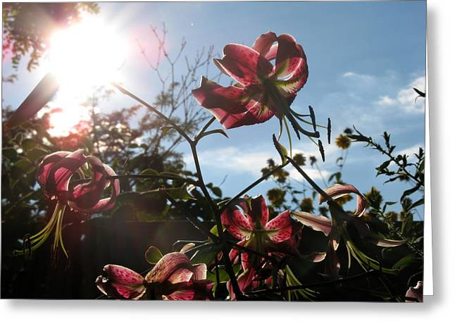 Greeting Card featuring the photograph Sunlight Through Flowers by Kimberly Mackowski