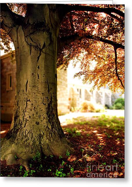 Sunlit Church Greeting Card by HD Connelly
