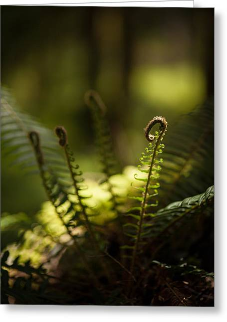 Sunlit Fiddleheads Greeting Card by Mike Reid