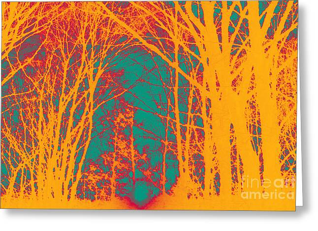 Sunlit Forest Greeting Card