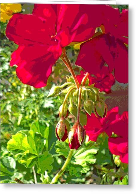 Sunlit Geraniums Greeting Card