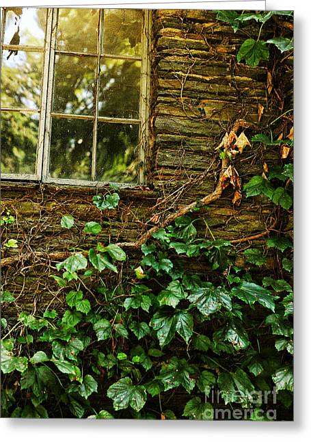 Sunlit Window And Grapevines Greeting Card by HD Connelly