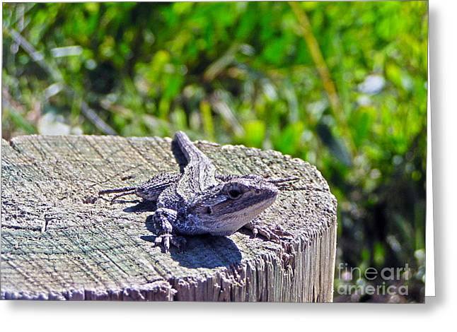 Sunning Greeting Card by Joanne Kocwin