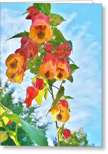 Sunny Bells Greeting Card