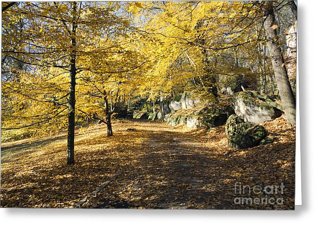 Sunny Day In The Autumn Park Greeting Card by Michal Boubin
