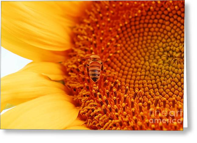 Sunny Day Greeting Card by Laurianna Taylor