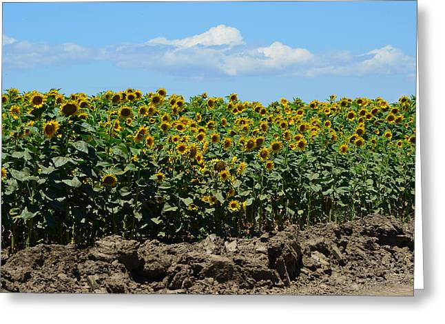 Sunny Day Greeting Card by Melissa  Maderos