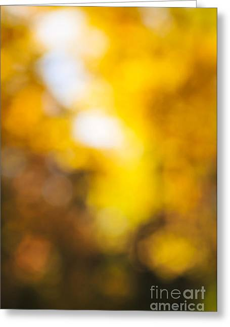 Sunny Fall Forest Greeting Card by Elena Elisseeva