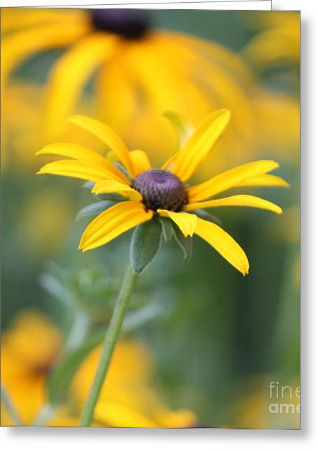 Sunny Flower - 2 Greeting Card by Marilyn West