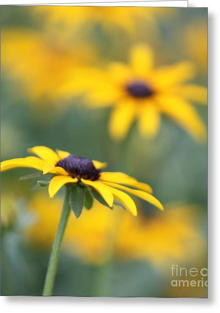 Sunny Flower Greeting Card by Marilyn West