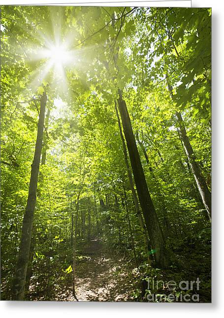 Sunny Forest Path Greeting Card