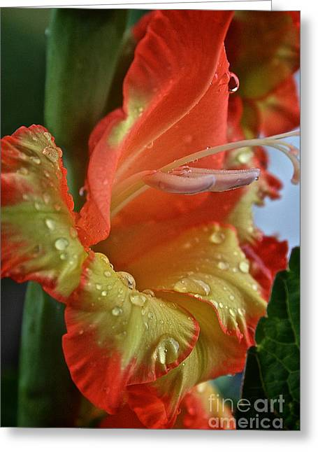 Sunny Glads Greeting Card by Susan Herber