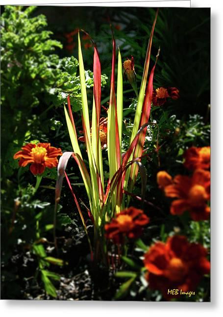 Sunny Grasses Greeting Card by Margaret Buchanan