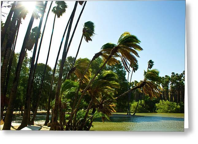 Sunny Lake Shore Greeting Card by Terry Thomas