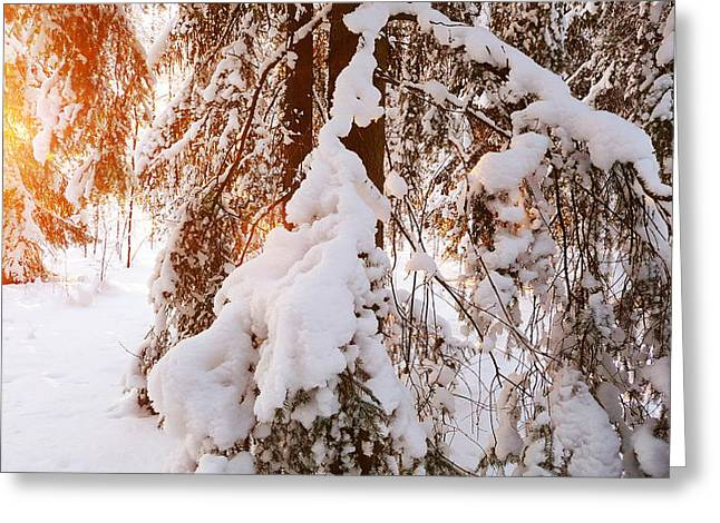 Sunny Moment Greeting Card by Mikko Tyllinen