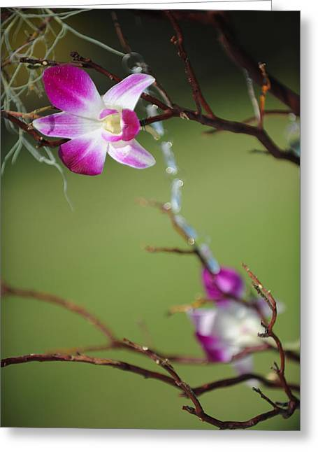 Sunny Orchid Greeting Card by Brandon McNabb