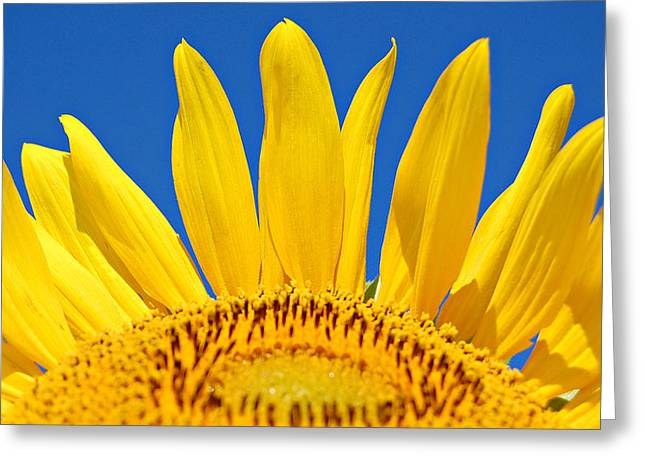 Sunny Skies Greeting Card by Amy Schauland