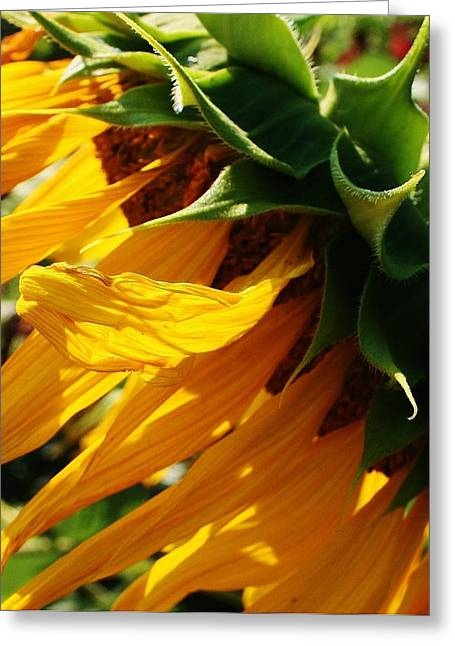 Sunny Times Greeting Card by Bruce Bley