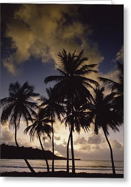 Sunrise At La Sagesse Bay Over Marquis Greeting Card by Gerry Ellis