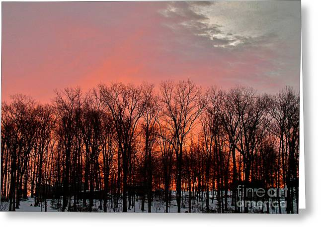Greeting Card featuring the photograph Sunrise Behind The Trees by Mark Dodd